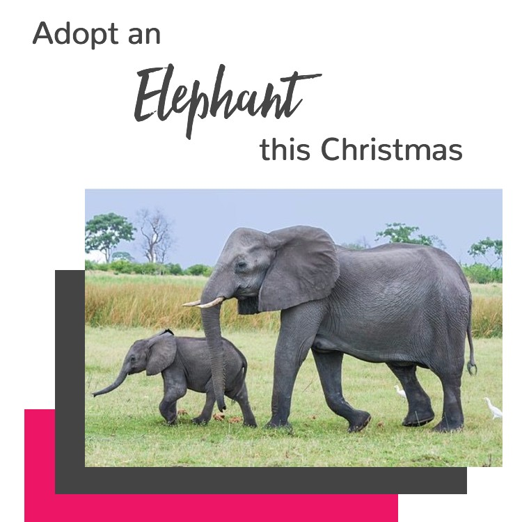 Ethical Brand Directory | Ethical Christmas Gift Guide 2017 | Eco-Friendly Gifts | Adopt an Elephant | WWF Adoption